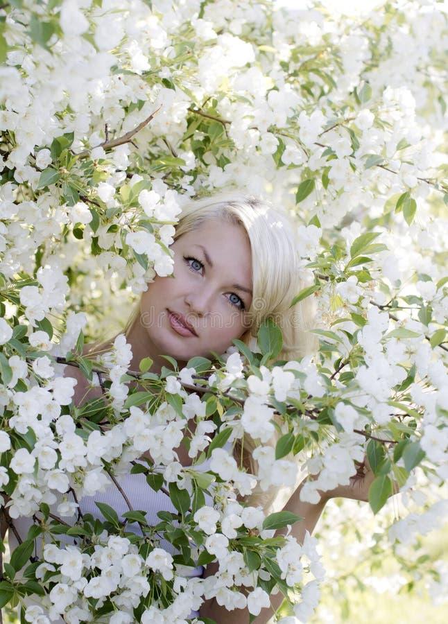 De lente stock afbeeldingen