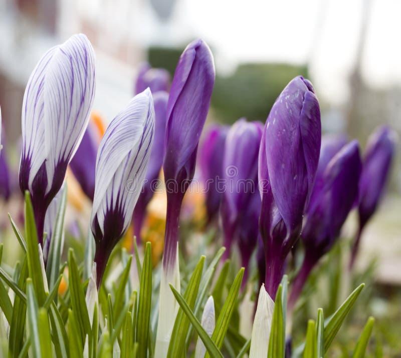 De lente! royalty-vrije stock foto