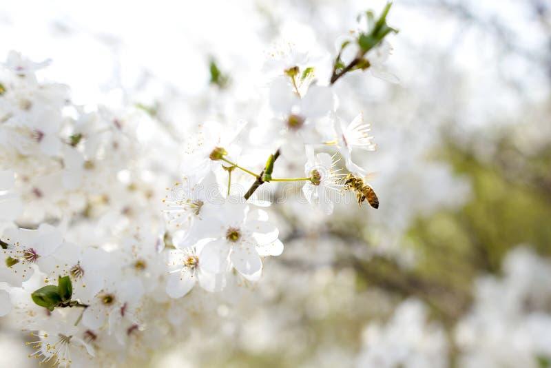 De lente royalty-vrije stock afbeelding