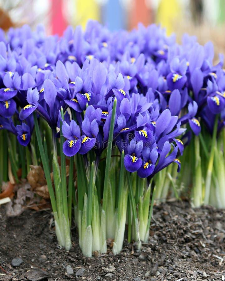 De lente is aangekomen! royalty-vrije stock foto