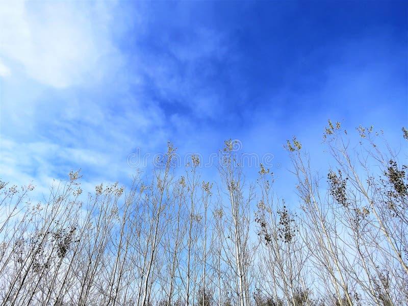 De lente-aard komt aan het leven, blauwe hemel stock afbeeldingen