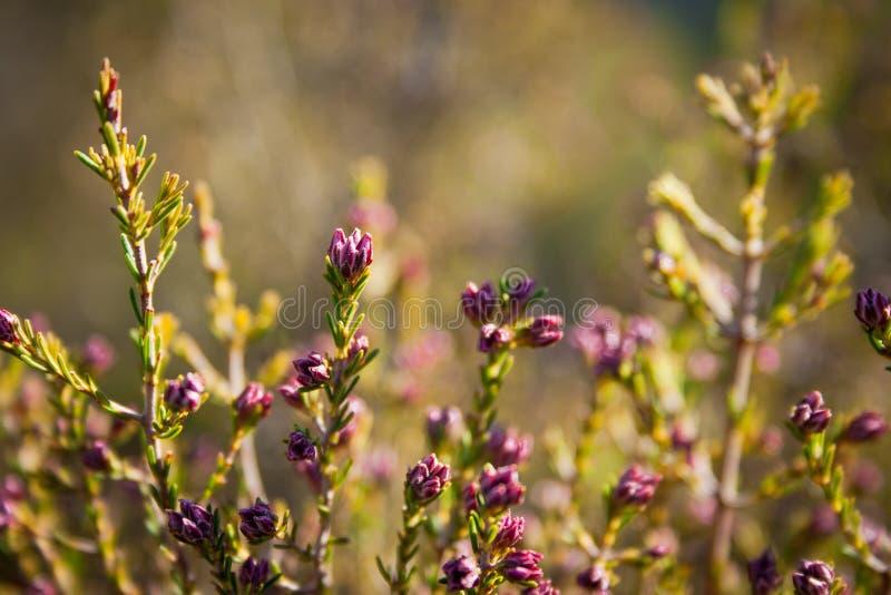 De lente begint met bloemen royalty-vrije stock fotografie