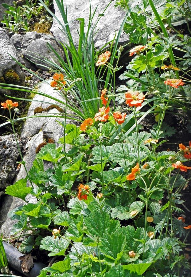 De lente bij de Botanische tuin van Zagreb ` s, flora, 3 stock fotografie