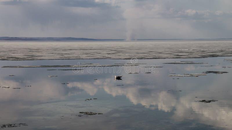 De lente bij de kust royalty-vrije stock afbeelding