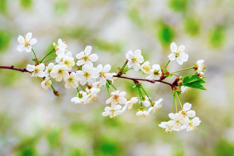 De lente bloeiende achtergrond royalty-vrije stock foto's