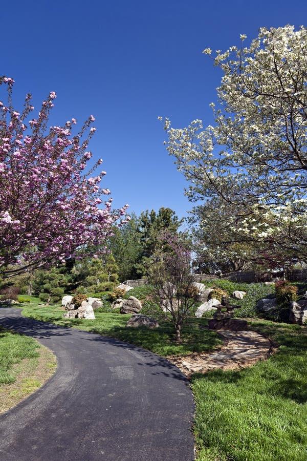 De lente Bloeiende Bomen op een Parkweg royalty-vrije stock afbeelding