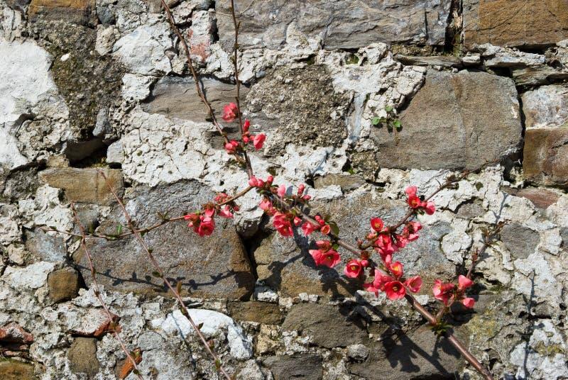 De lente bloeiende takken stock fotografie