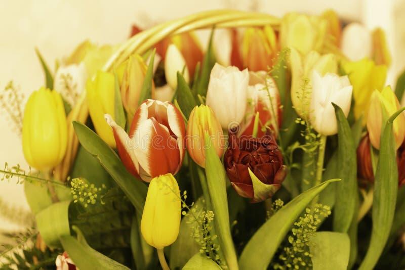 De lente bloeit banner - een boeket van multi-colored tulpen op een beige achtergrond stock afbeelding