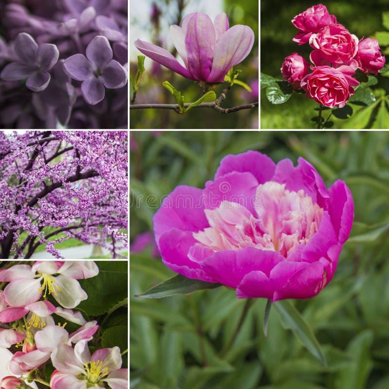 De lente bloeit collage Roze en violette bloesem in de lente royalty-vrije stock foto