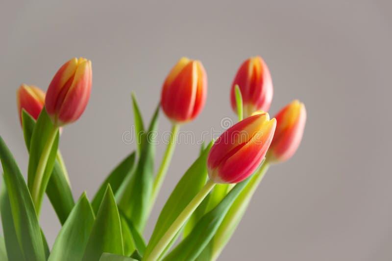 De lente bloeit kaart met tulpen stock foto