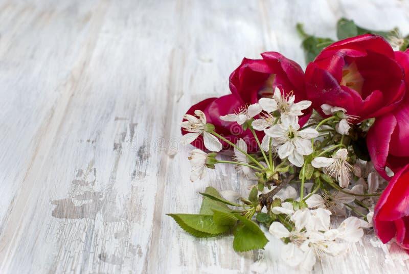 De lente bloeit rode tulpen en een twijg van kersenbloesems royalty-vrije stock afbeeldingen