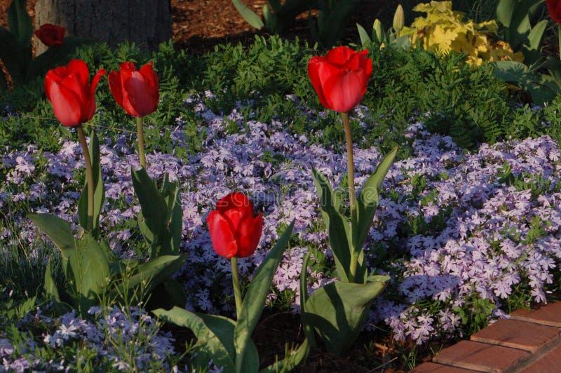 De lente bloeit Washington D C stock afbeeldingen