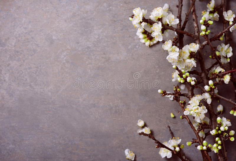 De lente bloemen humeurige achtergrond royalty-vrije stock afbeeldingen