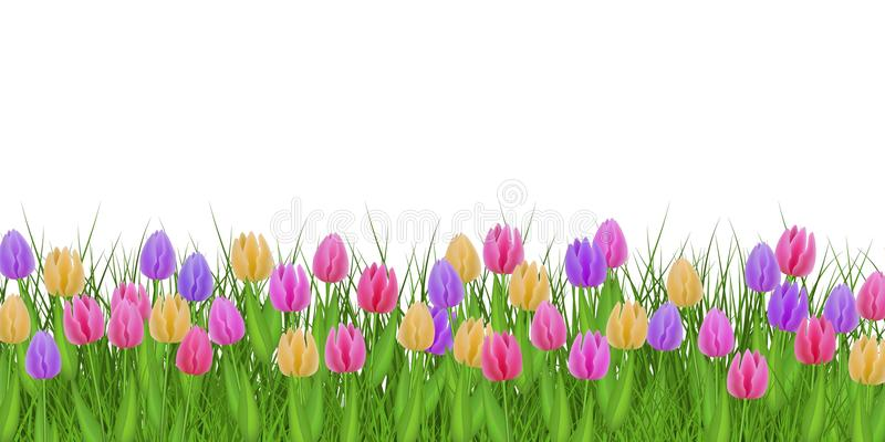 De lente bloemengrens met kleurrijke tulpen op vers groen die gras op witte achtergrond wordt geïsoleerd stock illustratie