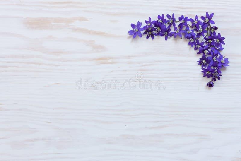 De lente bloemenpatroon met verse violette hepaticabloemen op witte houten achtergrond stock afbeeldingen