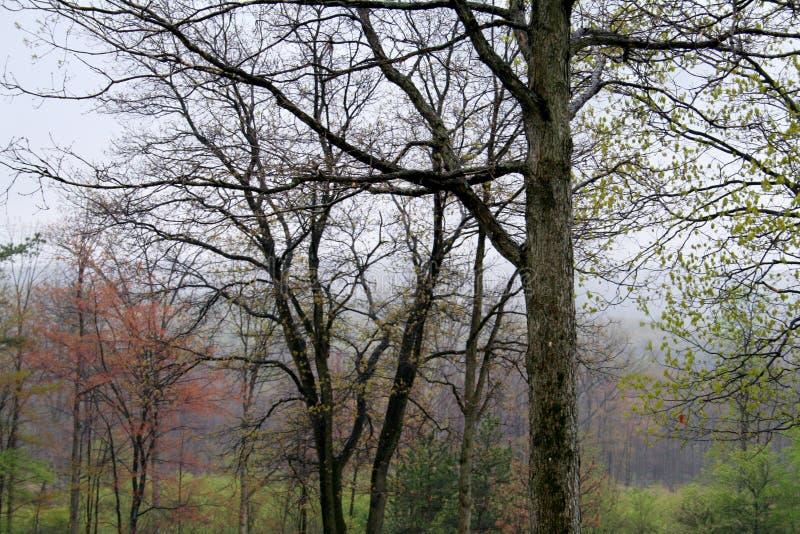 De lente in de bomen van Pennsylvania op een gebied royalty-vrije stock afbeeldingen