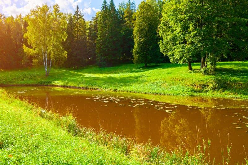 De lente boslandschap Groene de lentebomen dichtbij de rivier in zonnig weer royalty-vrije stock foto's