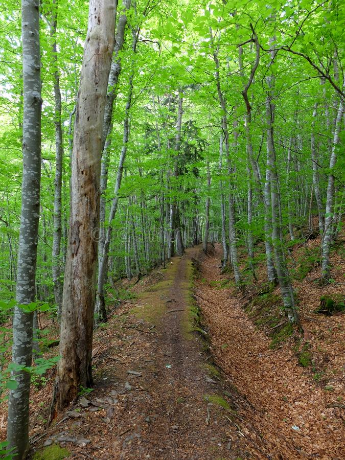 De lente bosweg stock foto's