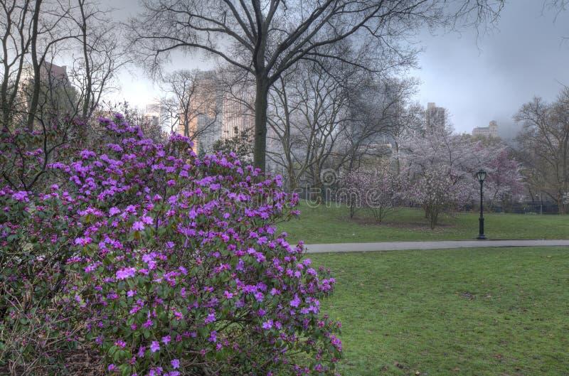 De lente in Central Park stock fotografie