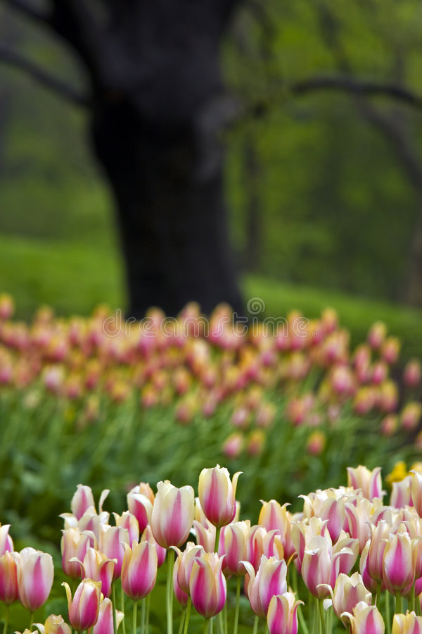 De lente in Central Park stock foto's