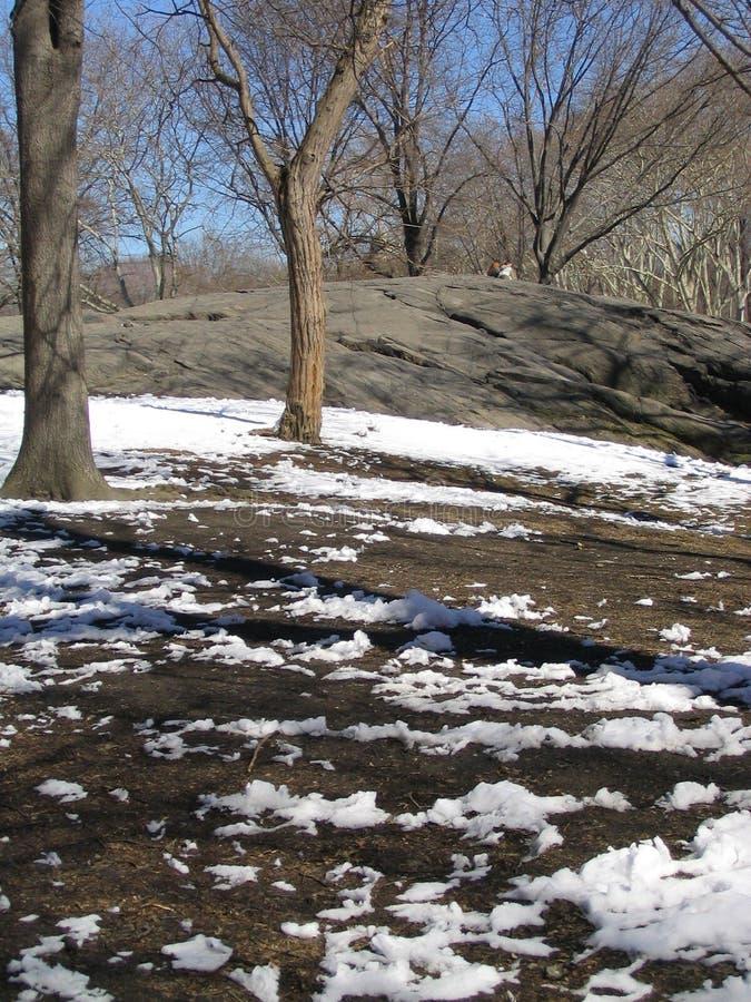 De Lente In Central Park Royalty-vrije Stock Fotografie