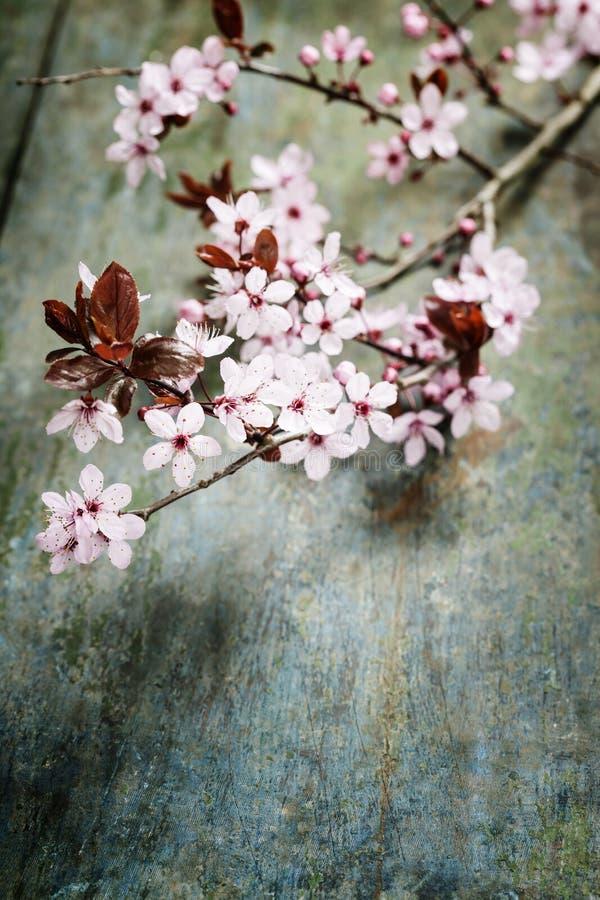 De lente Cherry Blossoms stock foto