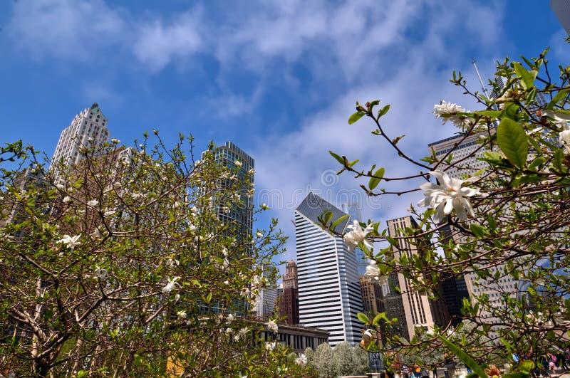 De lente in Chicago stock foto's