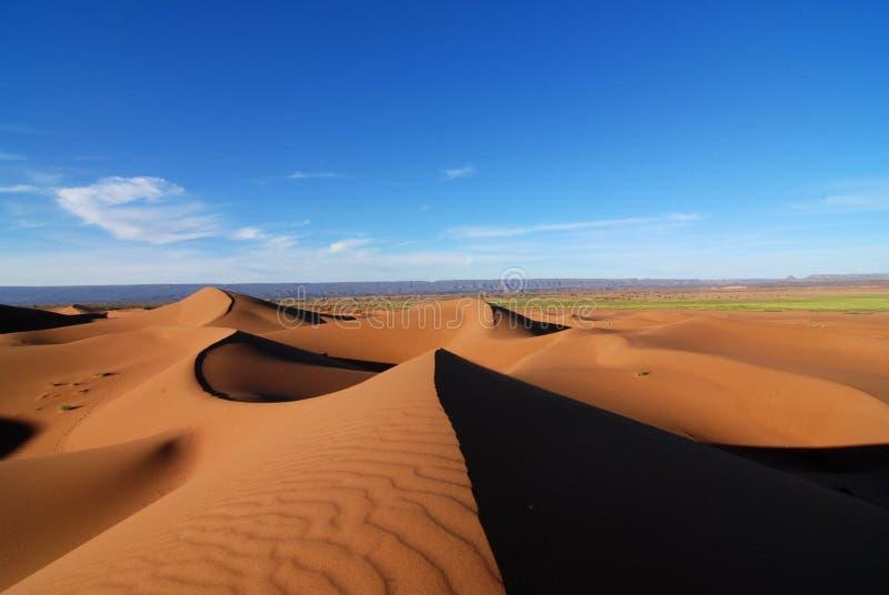 De lente in de Sahara stock fotografie