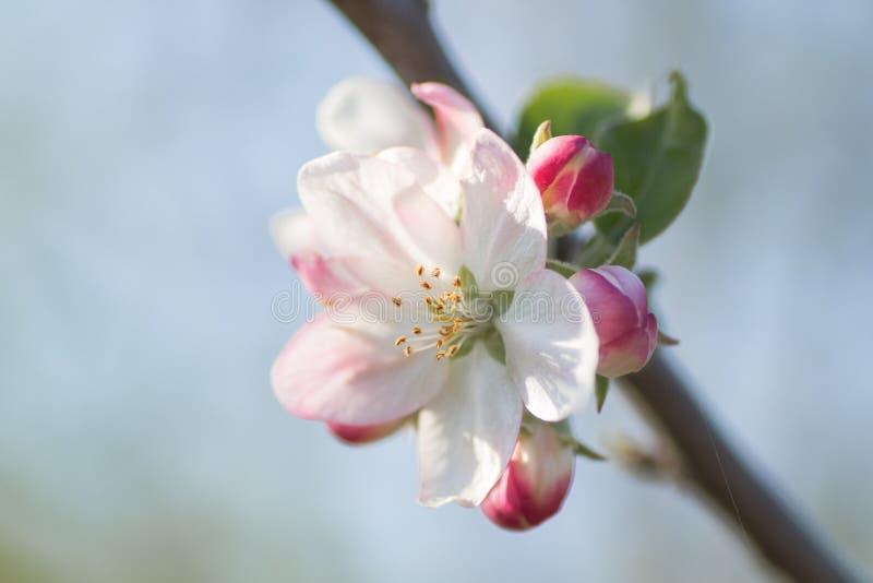 De lente detaail royalty-vrije stock afbeeldingen