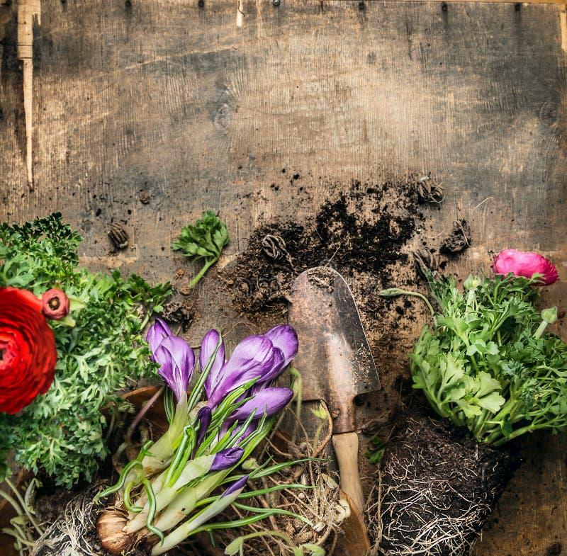 De lente die met lepel op rustieke houten achtergrond, hoogste mening tuinieren royalty-vrije stock afbeeldingen