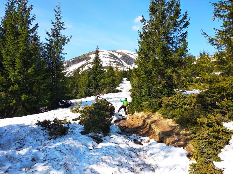 De lente die op een sneeuwberg in de Karpaten beklimmen royalty-vrije stock fotografie