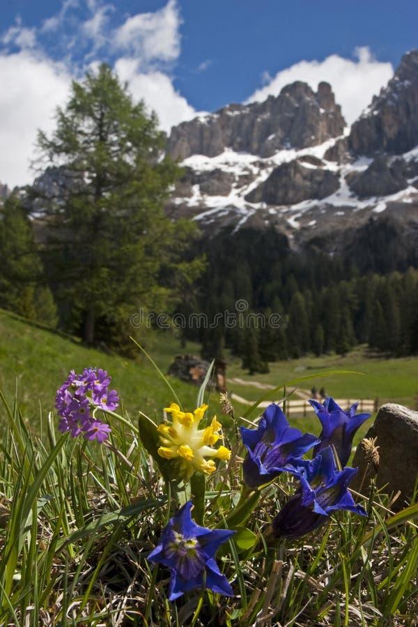 de lente in Dolomiet stock fotografie