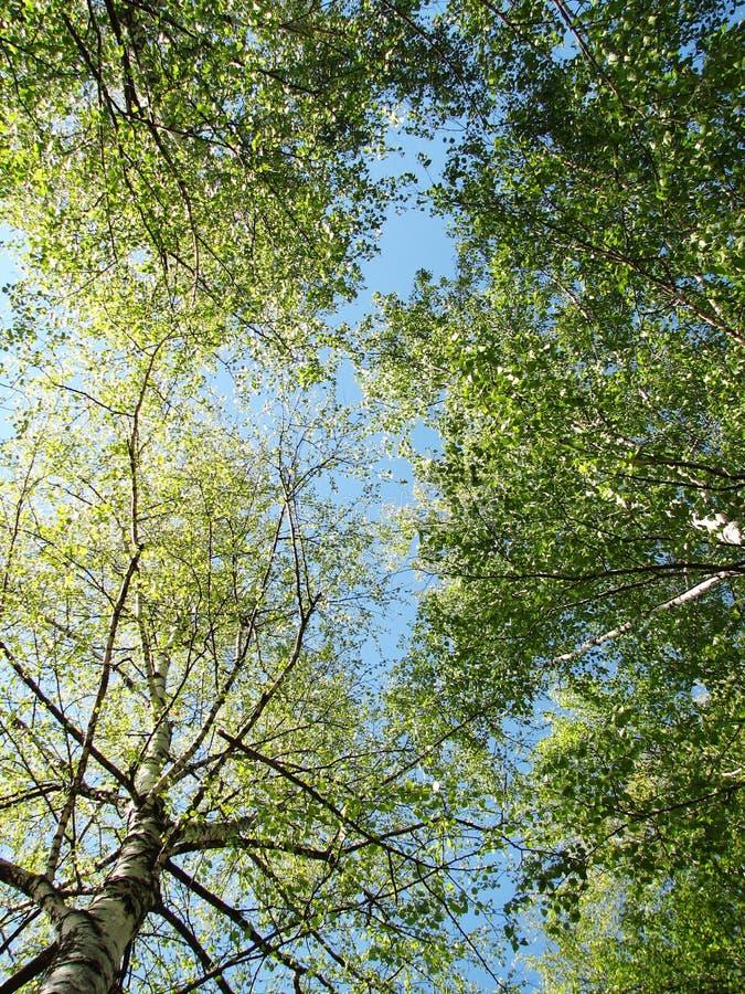 De lente doorbladert op de hemel royalty-vrije stock afbeelding