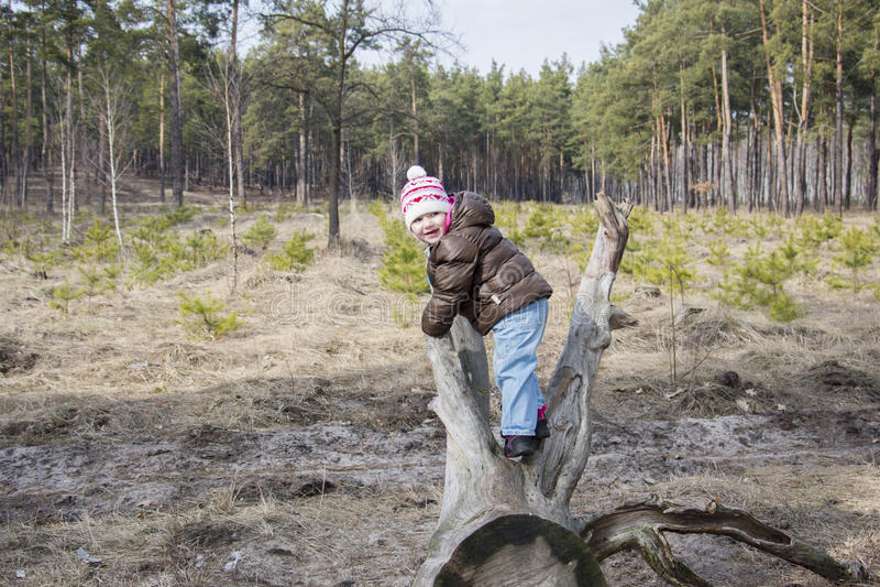 De lente in een zitting van het pijnboom bosmeisje op drijfhout royalty-vrije stock afbeelding