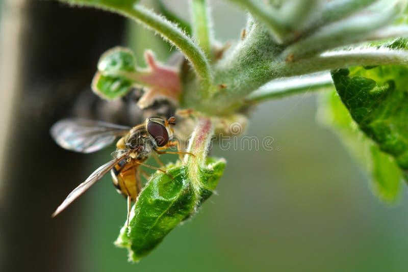 De lente en bij, tijd voor honing royalty-vrije stock afbeelding