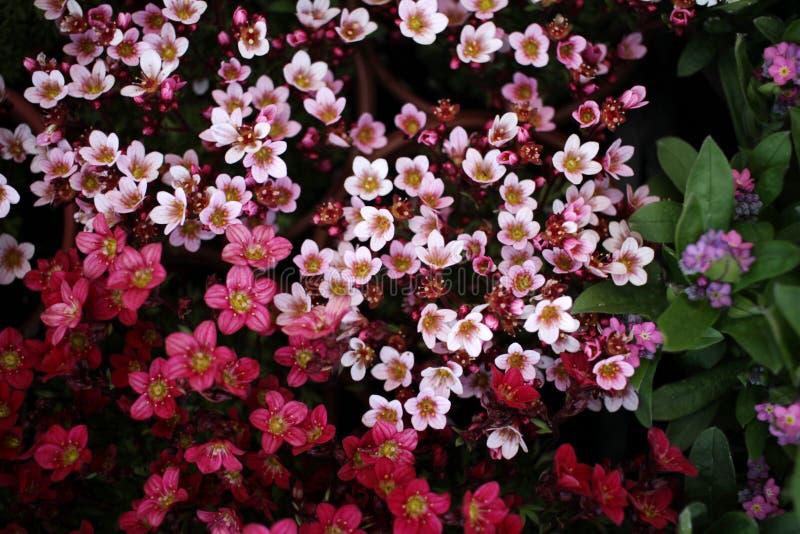 De lente en de zomerachtergrond Bloemen patroon Bloemtextuur De ruimte van het exemplaar Bloemenbehang Mooie bloemen als achtergr stock foto's
