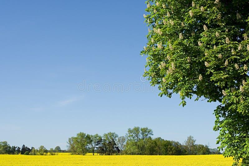 De lente in Europa royalty-vrije stock foto