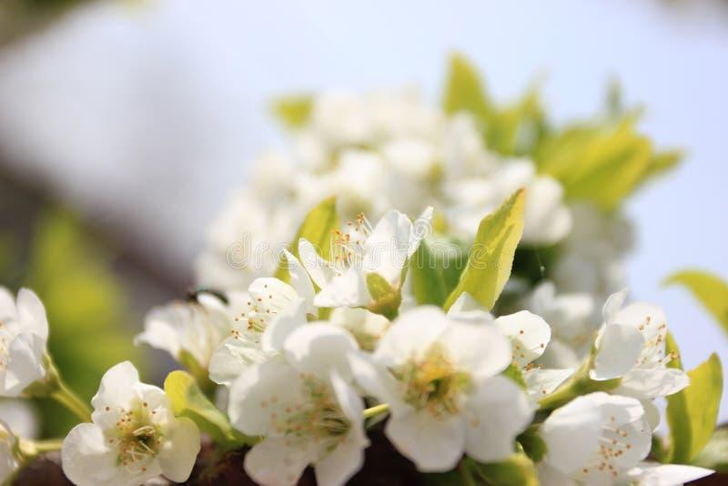 De lente in de geboortestad van China royalty-vrije stock foto