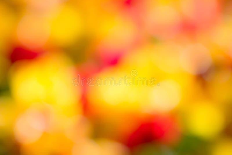 De lente gele Bloemen over kleurrijke vage achtergrond met boke stock foto's