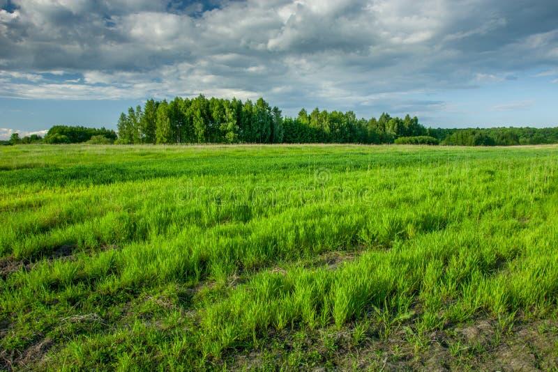 De lente groen gebied, bos op de horizon en donkere wolken op de hemel stock foto's