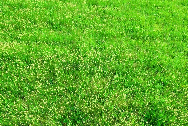 De lente groen gras in bloeitextuur royalty-vrije stock foto's