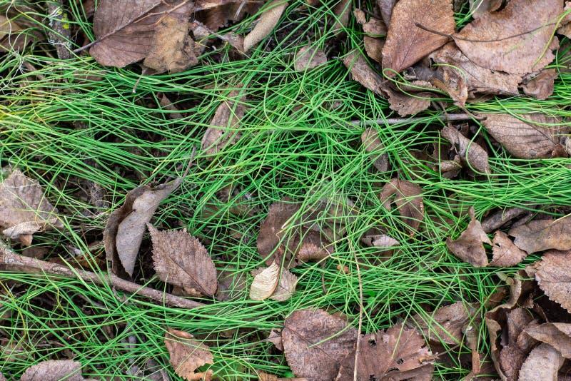 De lente groen gras en oude de herfstbladeren royalty-vrije stock foto's