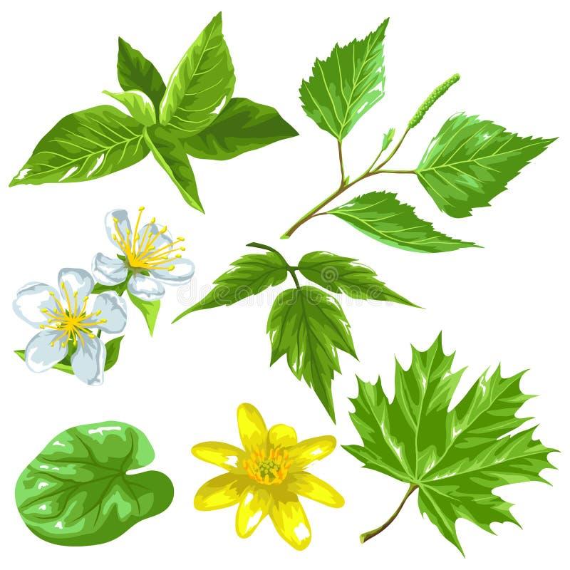 De lente groene bladeren en bloemen Reeks installaties, takje, knop royalty-vrije illustratie
