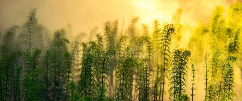 De lente groene installatie bij nevelige zonsopgang stock foto