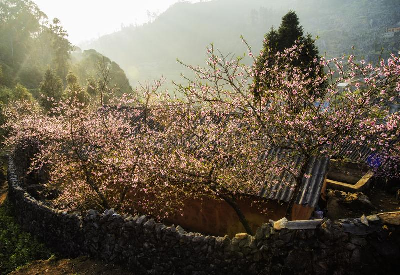 De lente in Ha Giang, Vietnam stock fotografie
