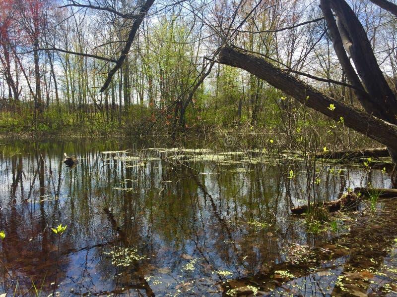 De lente in het moeras royalty-vrije stock afbeelding