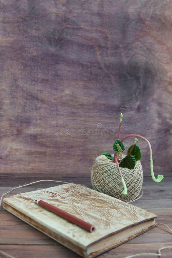 De lente het tuinieren concept De lente die activiteit planten stock fotografie