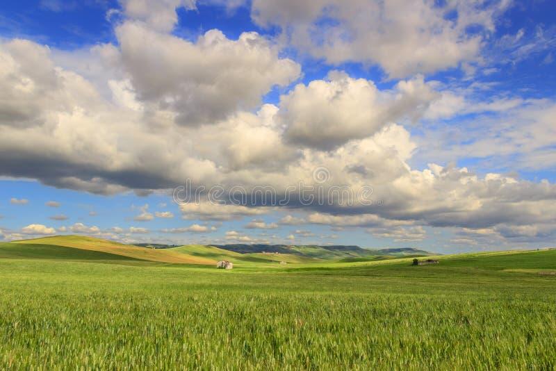 de lente Heuvelig die landschap met onrijpe gebieden van tarwe, door wolken worden overheerst Italië stock foto
