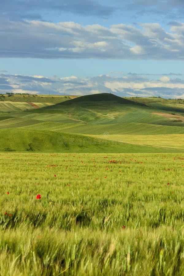 de lente Heuvelig die landschap met onrijpe gebieden van tarwe, door wolken worden overheerst Italië royalty-vrije stock afbeelding