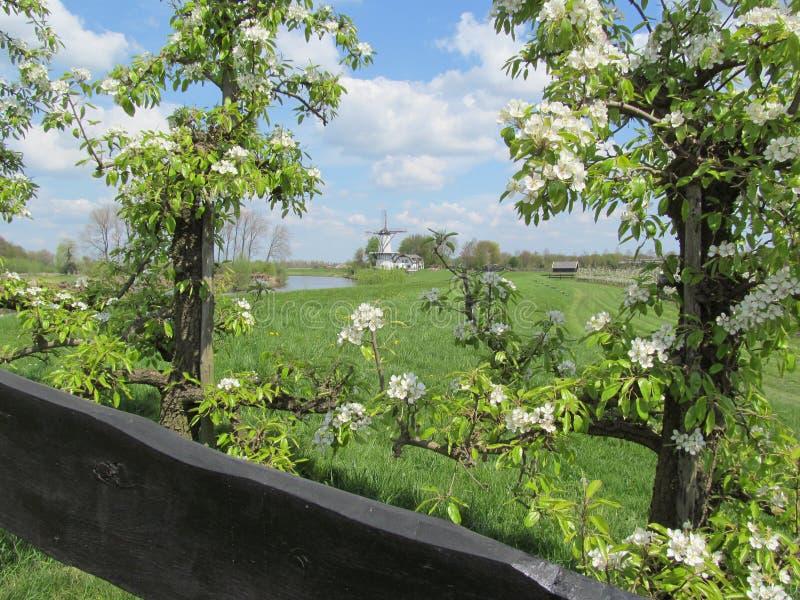 De lente in Holland stock afbeeldingen